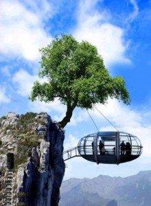 Progrès et environnement - le con coupe l'arbre.